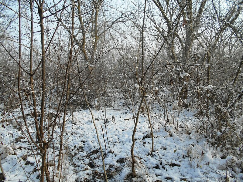 Начало Зимы, в походе, Природы снежное убранство ... DSCN0292.JPG