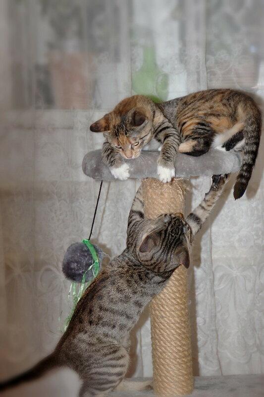 Кошачьи забавы.