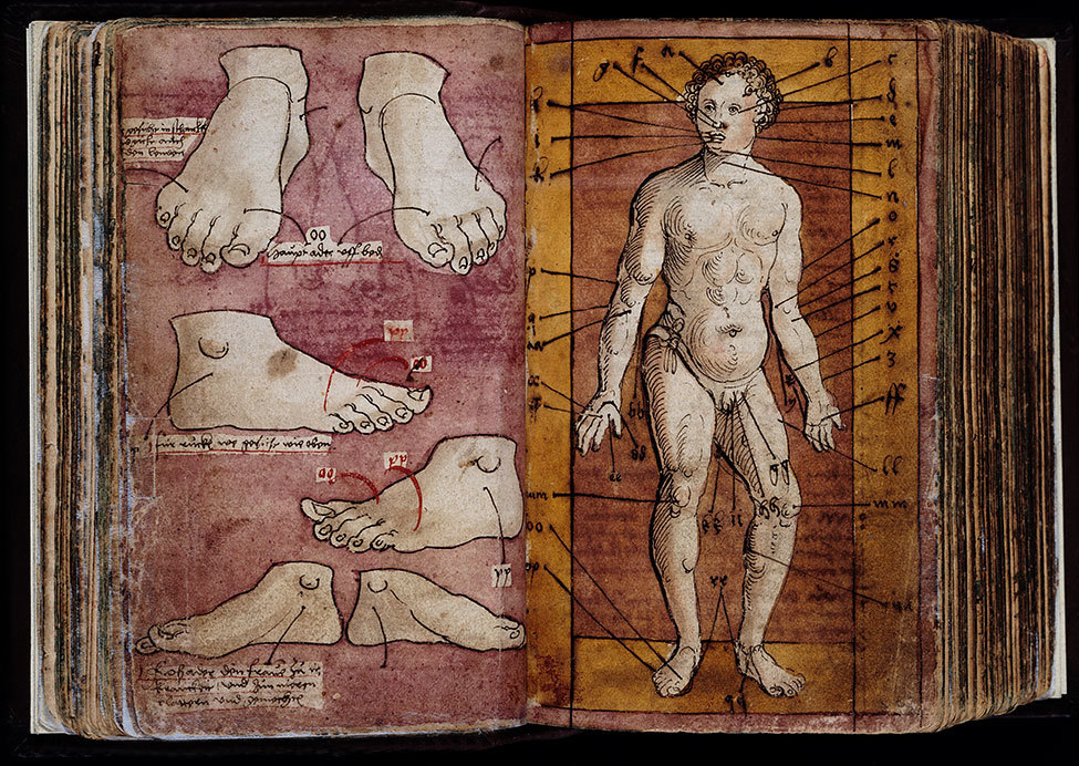 "L0023523 Western Manuscript 93, veins of the foot and ""vein man"""