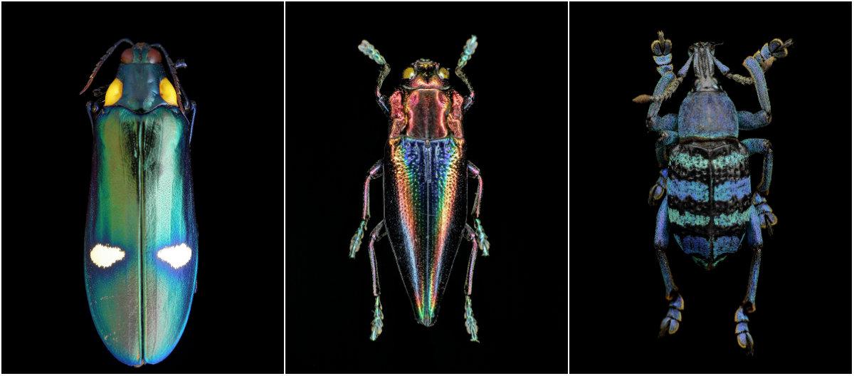 Энтомология: макро-портреты насекомых Francesco Bagnato