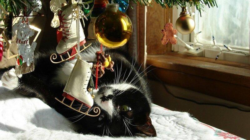 обоя-зима-кот.jpg