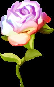 розы фиолетовые