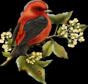 птички красные