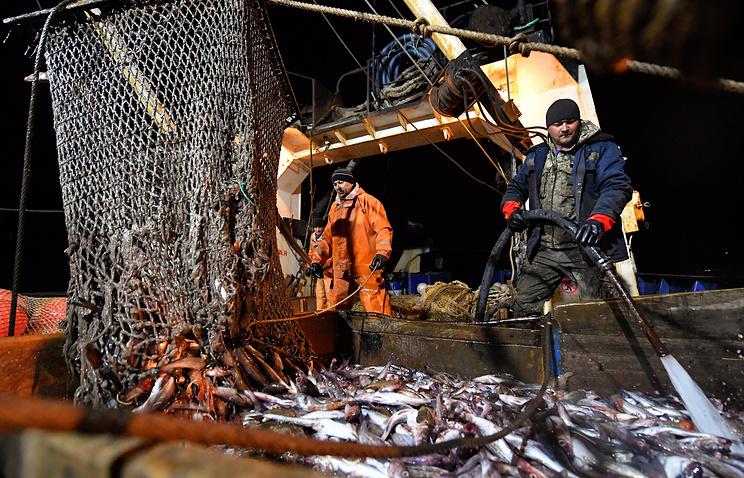 Правительство РФутвердило перечень видов водных биоресурсов сквотой наинвестиционные цели