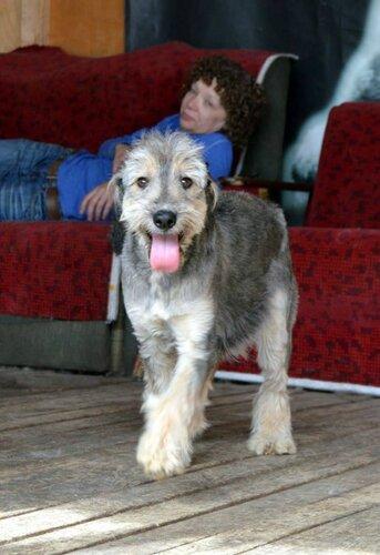 Бони собака из приюта москва