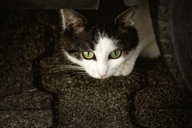 © Pixabay  Существует мнение, что кошки— несамые преданные питомцы. Ноданная история навсег