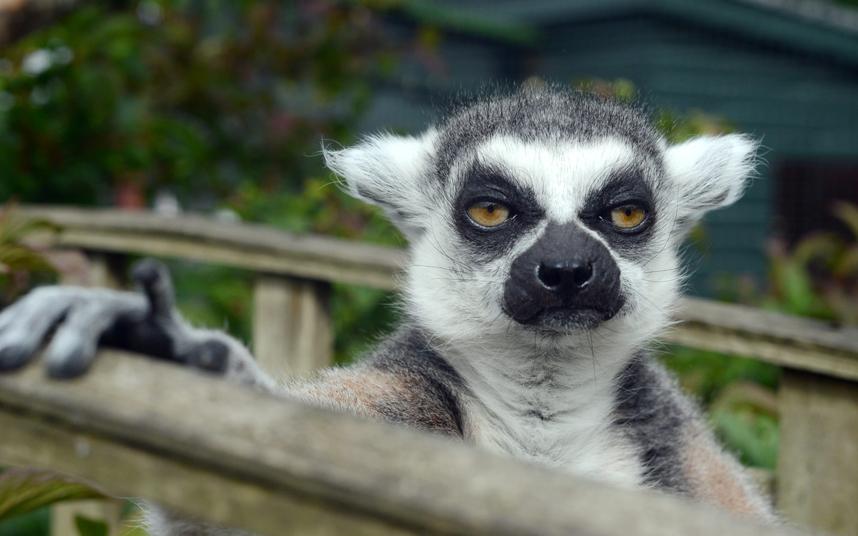 4. Ничто не предвещало беды…Бегемот отдыхает в Тбилисском зоопарке в Грузии. Скоро начнется нав