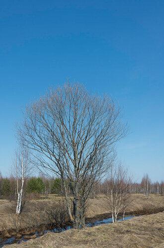 Альбом: Мой плантариум Ива - Salix Автор фото: Владимир Брюхов