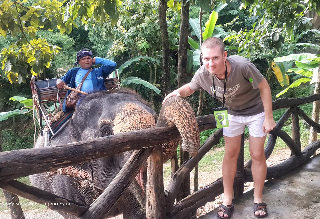 катание на слонах отзывы