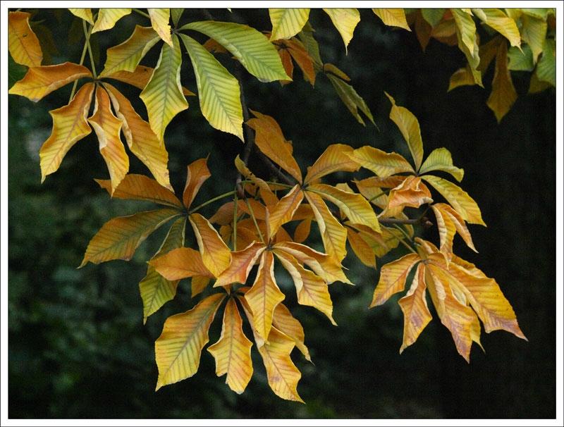 126_Leaf.jpg