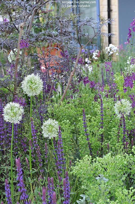 The RHS Greening Grey Britain Garden (45).jpg