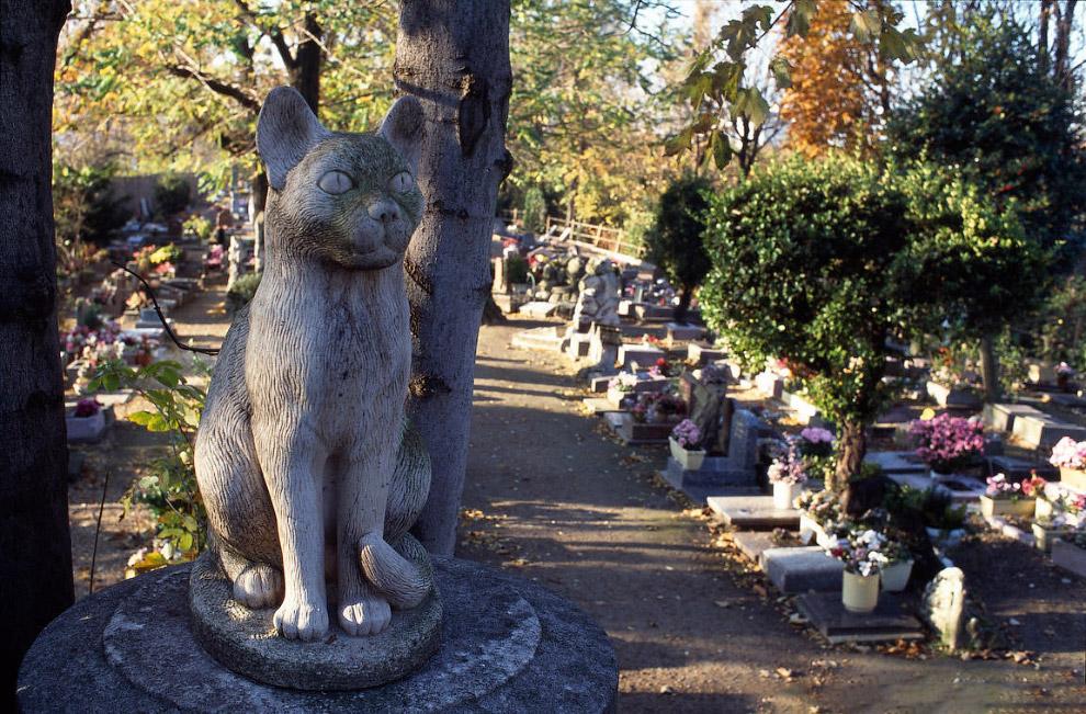 3. Нашли свой последний приют на Кладбище собак и многие животные-актёры, например, собака-актё