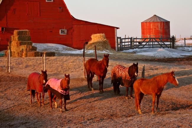 Провинция Саскачеван, Канада Канадская провинция предлагает недавно окончившим вузы специали