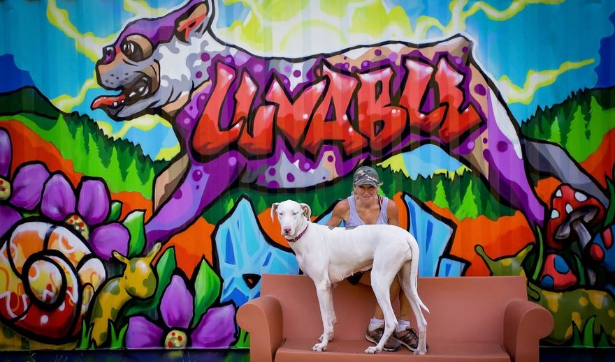 Приют для животных построил люкс-коттедж для собак, потому что животные не должны жить в клетке.