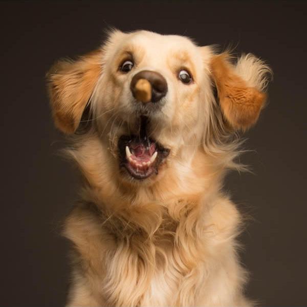 Харизматичные собаки, которые словно хотят нам что-то сказать