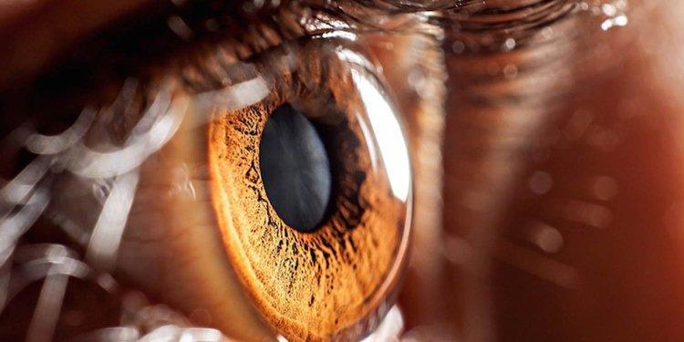 Мозг человека способен сам «увидеть будущее»— ученые