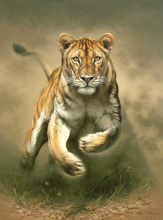 Animal Paintings by Fabrizio Caforio