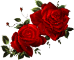 CJ_Colored Roses 2Lg.png