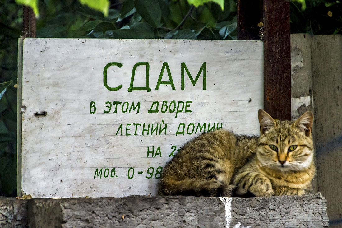 Одесские котики