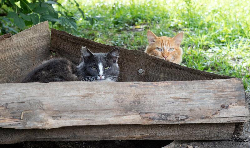серая кошка и рыжая