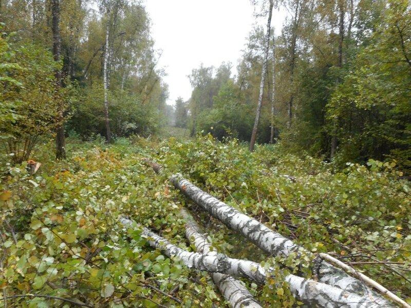 Лыжная трасса в Битце, вырубка леса под застройку