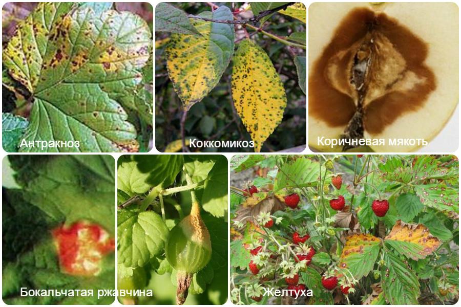 Основные болезни плодово-ягодных культур и способы решения проблемы - таблица