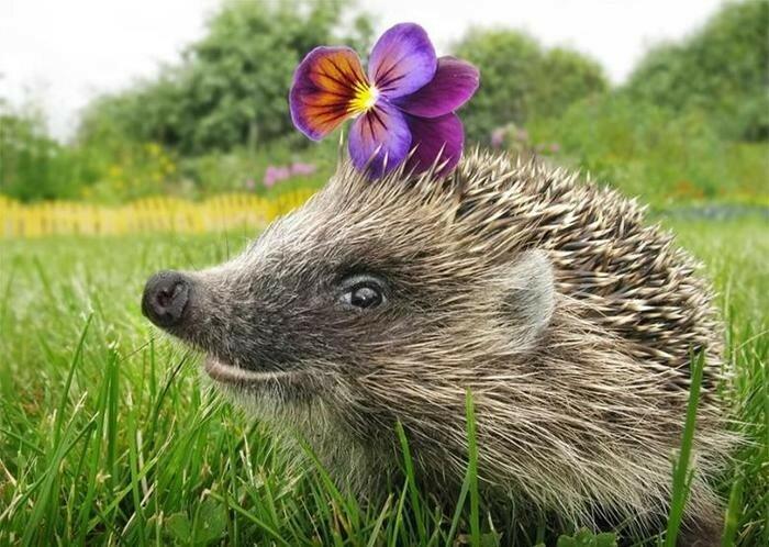 Самые глупые средневековые мифы о животных   бестиарии
