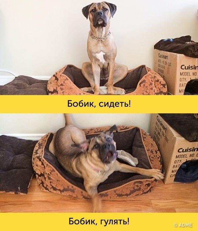 15доказательств, что вкаждой собаке живет великий актер (15 фото)