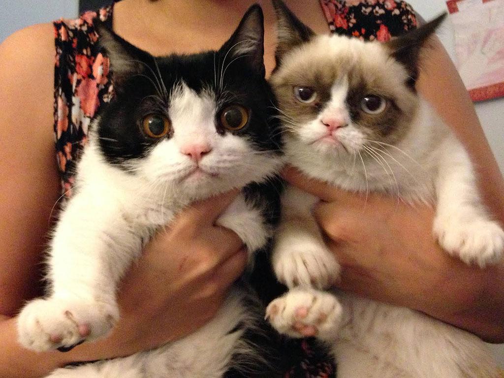 29. Кошка не навязывает вам свое мнение.