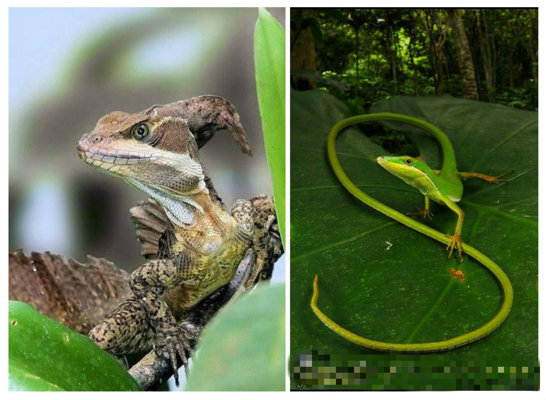 Существует 2 способа размножения ящериц: откладывание яиц и живорождение.