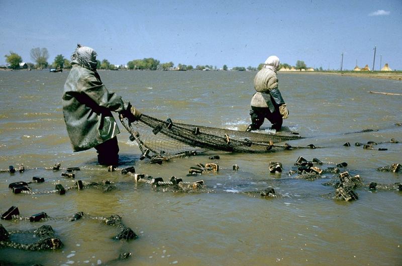 Как добывали советскую черную икру — лучшую черную икру в мире (14 фото)