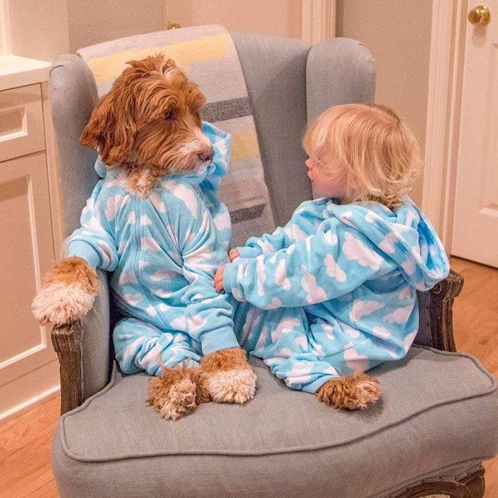 3-летний усыновлённый мальчик и пёс из приюта – лучшие друзья