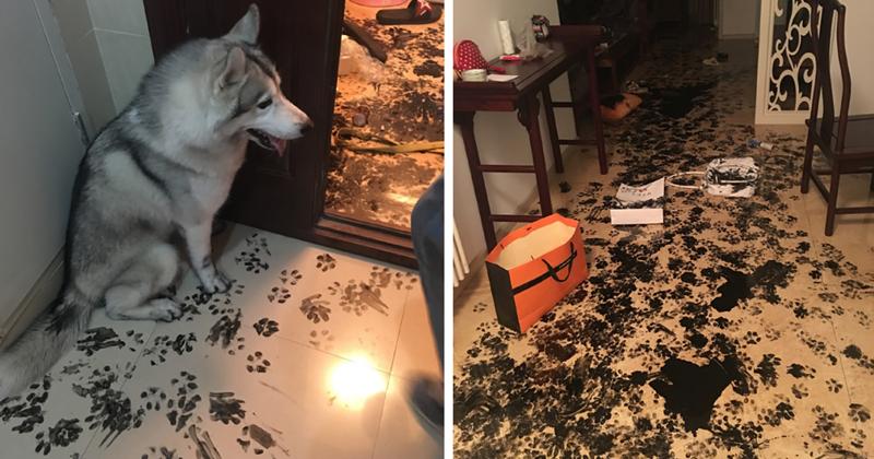 Собака расправилась с новой подушкой, а коты устроили себе веселье