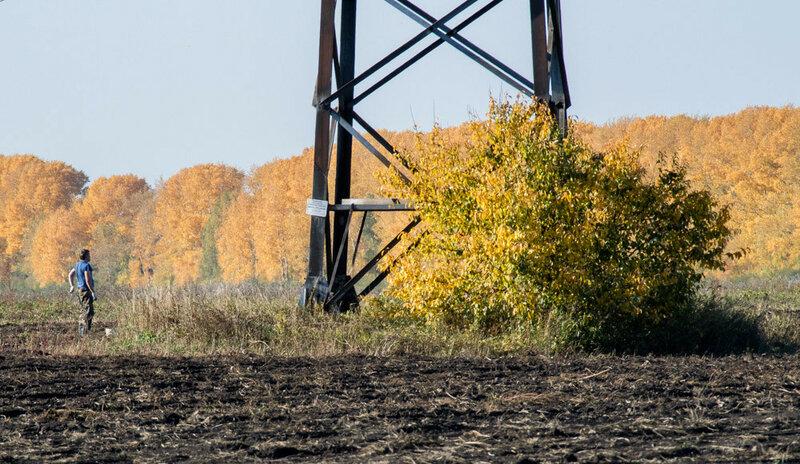 осенние фотографии, желтые листья, поле, человек