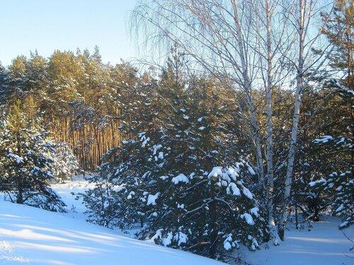 Зимний лесной пейзаж