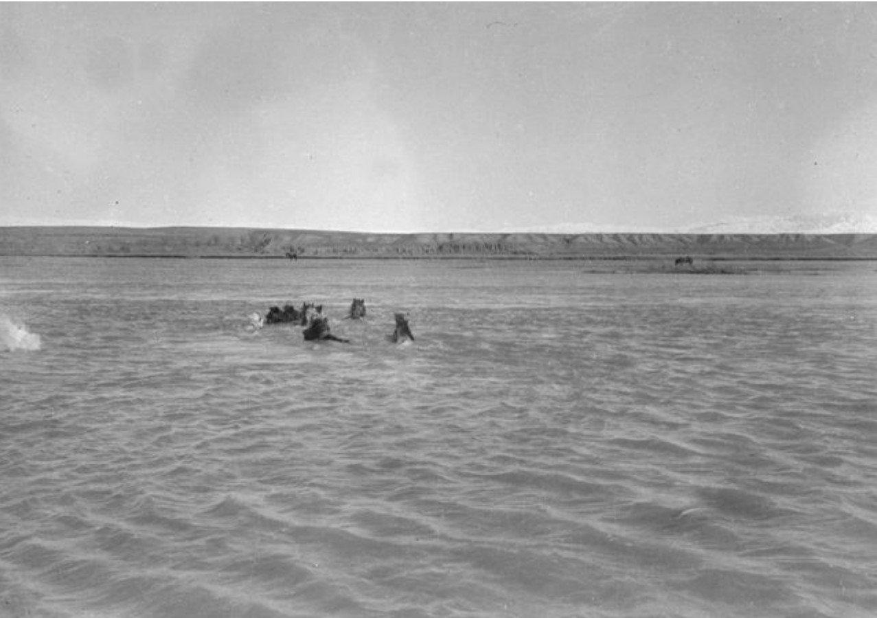 Купание лошадей в реке Или