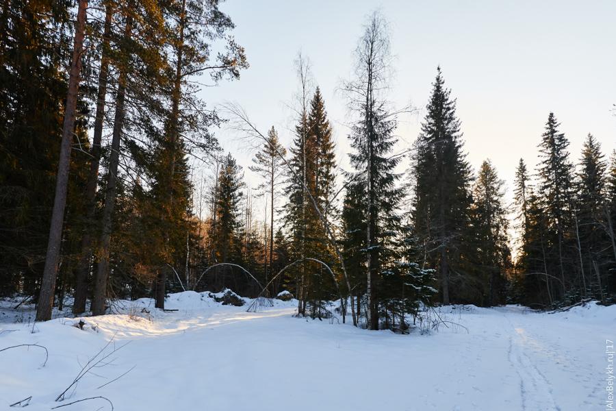 alexbelykh.ru, леса Карелии