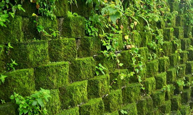 вертикальное озеление мхом