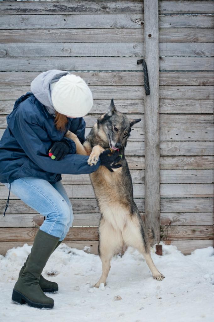 Ляля и Лиля собаки из приюта догпорт