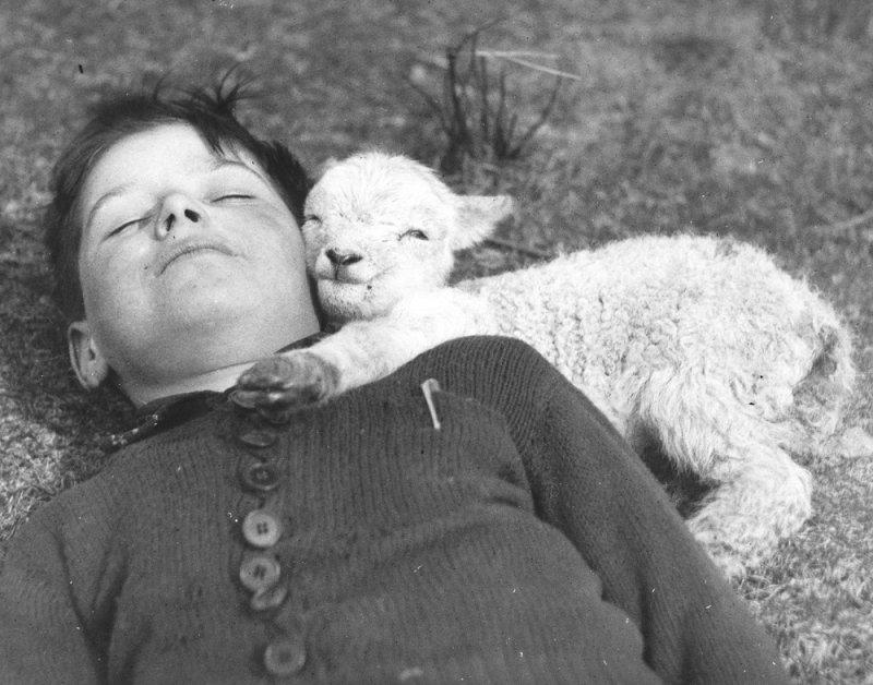 По Фрейду  На детскую забывчивость обратил внимание еще Зигмунд Фрейд. В своей работе 1905 года «
