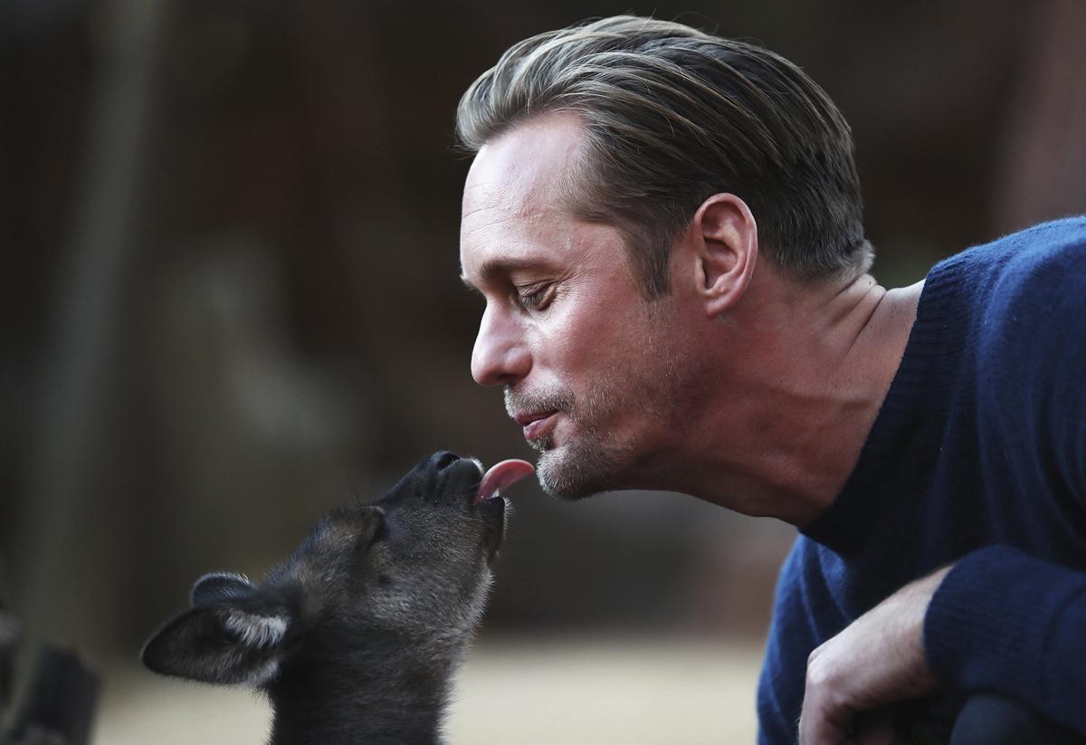 26. Шведский актер Александр Скарсгард целует малыша кенгуру в зоопарке Сиднея, Австралия, во время