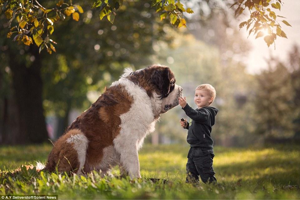 Матвей, почти 2 года, не боится зубов длинношерстного сенбернара Миши, который весит 98 кг. Миша — самая большая из собак, которых снимал Энди.