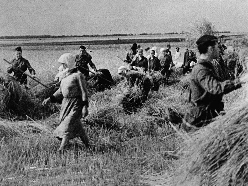В прифронтовой полосе. Солдаты помогают колхозникам убирать урожай.jpg