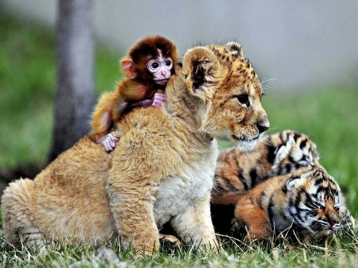 animal-photos-you-wont-forget