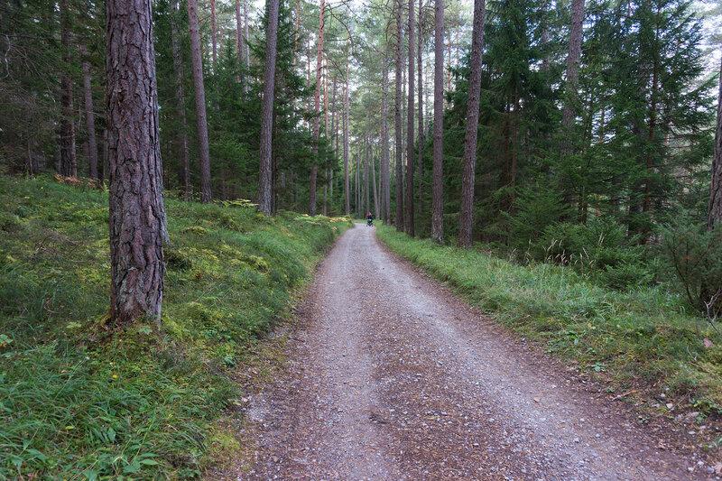 веломаршрут Via Claudia Augusta по сосновому лесу
