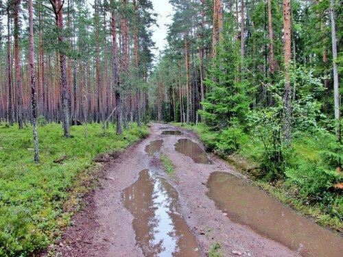 Лесная дорога после дождя