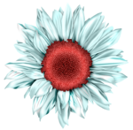 LH_Curious_Flower_011.png