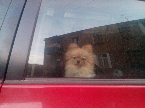 собачка в машине