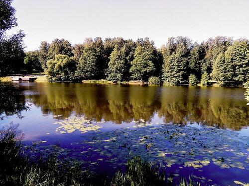 Тихим летним утром на пруду