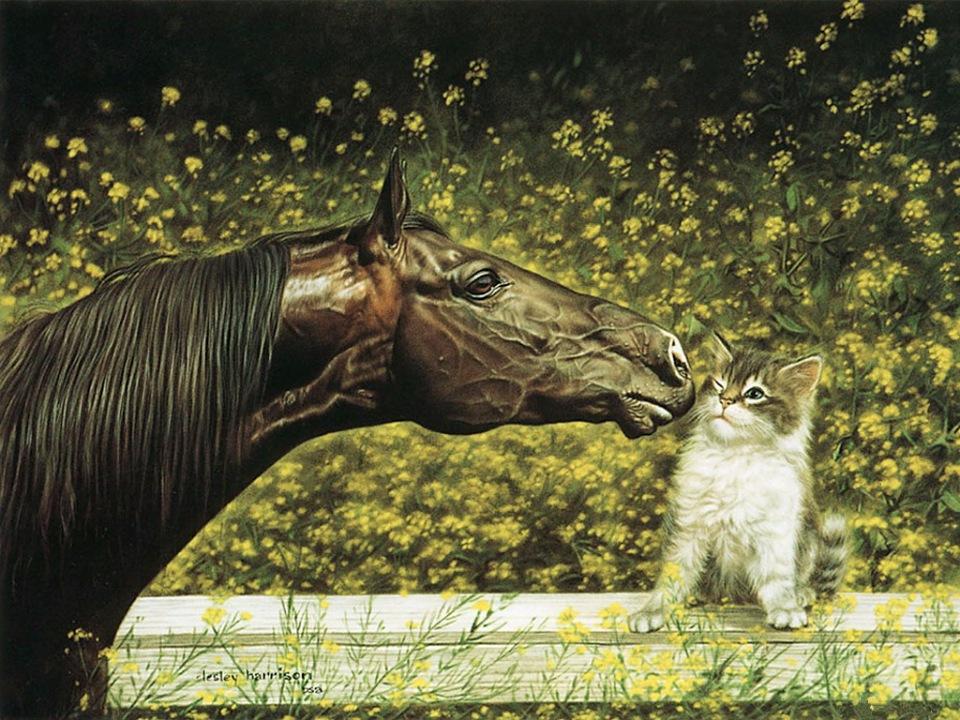 Животные на картинах  Лесли Харрисон